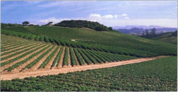 New crop coefficients estimate water use of vegetables, row crop