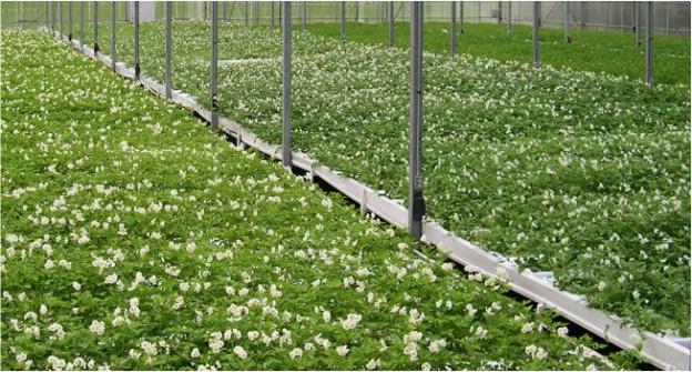 greenhouseHeaderImg